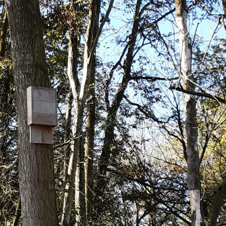 Biobased vleermuizenkasten Noordwaard
